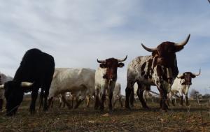 Reportaje de Mundotoro a la ganadería de El Uno